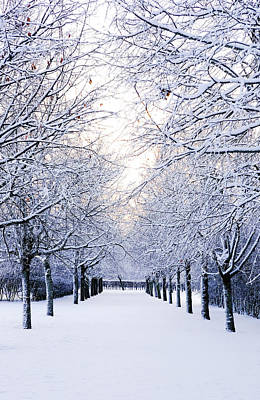 Snowy Pathway Art Print by Marius Sipa