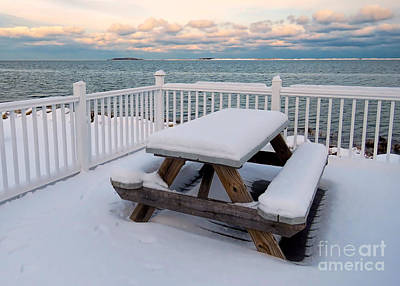 Photograph - Snowy Picnic by Janice Drew