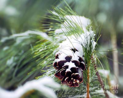 Photograph - Snowy Pine Cone by Kerri Farley