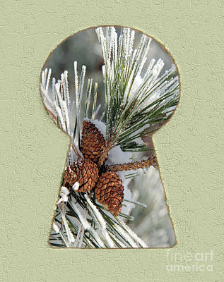 Pine Cones Drawing - Snowy Pine Keyhole by Steve Edwards