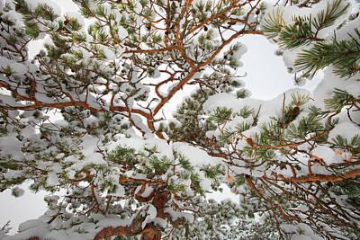 Photograph - Snowy Pine Tree Pattern by Ulrich Kunst And Bettina Scheidulin