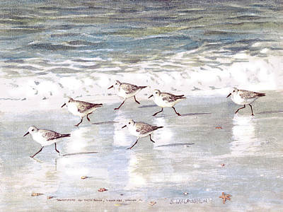 Sandpiper Painting - Snowy Plover Sandpipers On Siesta Key Beach by Shawn McLoughlin