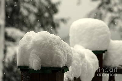 Photograph - Snowy Posts by Leone Lund
