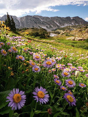Photograph - Snowy Range Flowers by Emily Dickey