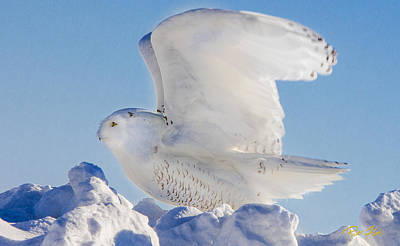 Photograph - Snowy Ready For Lift-off by Rikk Flohr