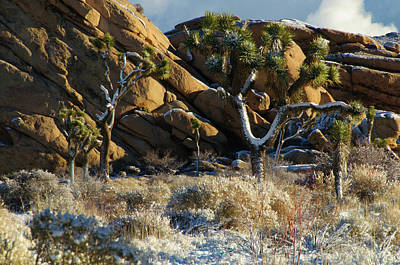 Photograph - Snowy Rocky Desert by Connie Cooper-Edwards