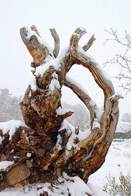 Photograph - Snowy Roots by Shane Bechler