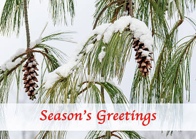 Photograph - Snowy Season's Greetings by Joni Eskridge