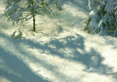 Photograph - Snowy Spruce Shadows by Clare VanderVeen