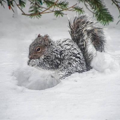 Photograph - Snowy Squirrel by Cathy Kovarik