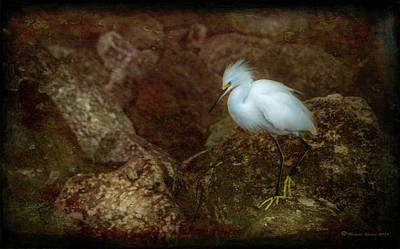 Snowy Egret Photograph - Snowy Style by Marvin Spates
