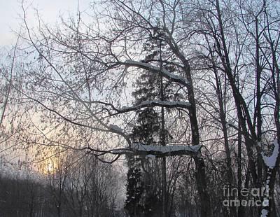 Photograph - Snowy Sunset by Anna Yurasovsky