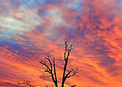 Photograph - Snowy Sunset by Brenda Conrad