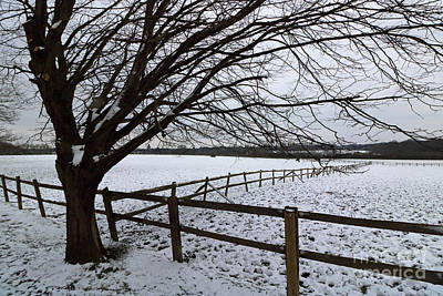 Photograph - Snowy Surrey Countryside by Julia Gavin