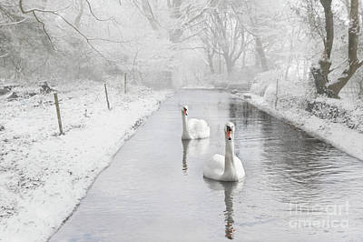 Photograph - Snowy Swan Lake by Terri Waters