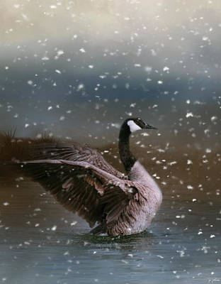 Goose Photograph - Snowy Swim by Jai Johnson