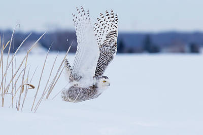 Photograph - Snowy Take Off by Mircea Costina Photography