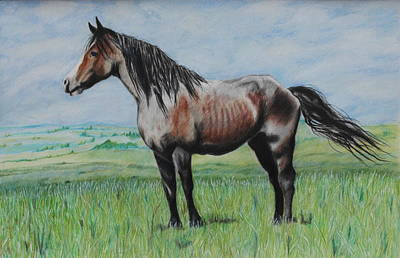 Drawing - Snowy The Nokota Stallion by Jeanne Fischer