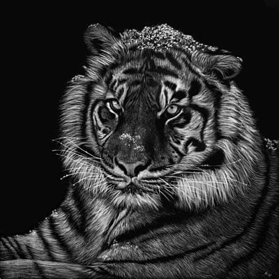 Drawing - Snowy Tiger by Heather Ward