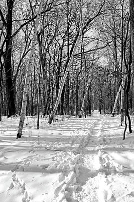 Photograph - Snowy Trail 3 Bw by Mary Bedy