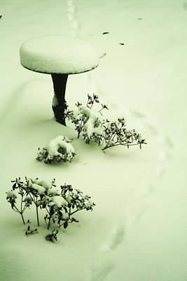 Photograph - Snowy Trail by Adam LeCroy