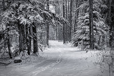 Photograph - Snowy Trail by David Heilman