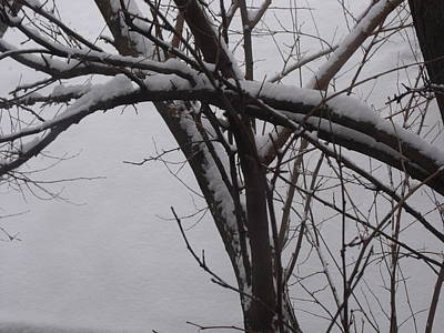 Snowy Tree II Art Print by Anna Villarreal Garbis