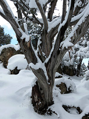 Photograph - Snowy Tree by Laurel Powell