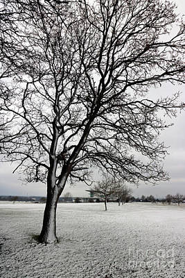 Photograph - Snowy Tree On Epsom Downs Surrey by Julia Gavin