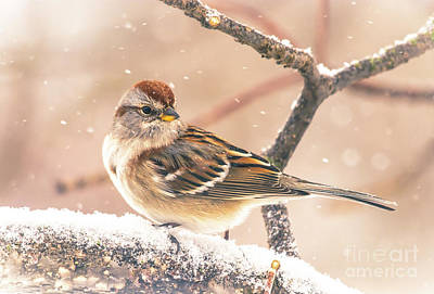 Photograph - Snowy Tree Sparrow by Cheryl Baxter