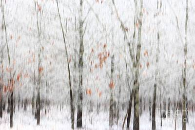 Photograph - Snowy Trees Abstract by Benanne Stiens