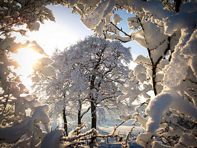 Photograph - Snowy Trees by RKAB Works