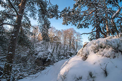 Photograph - Snowy Trees. Saxon Switzerland by Jenny Rainbow
