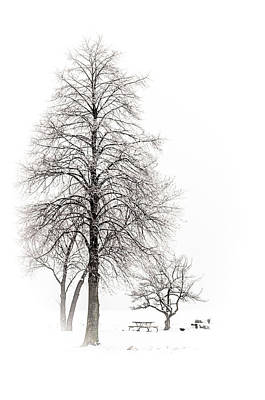 Photograph - Snowy Trees by Stewart Helberg