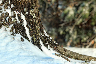 Photograph - Snowy Trunk by Travis Rogers