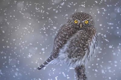 Snowy Night Digital Art - Night Owl by Joy McAdams