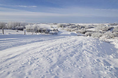 Photograph - Snowy Vista by Dee Cresswell
