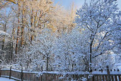 Photograph - Snowy Wake Up Call by Greg Fortier