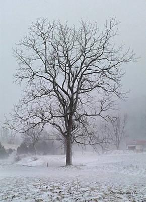 Photograph - Snowy Walnut by Denise Romano