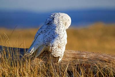 Photograph - Snowy White Owl  by Athena Mckinzie