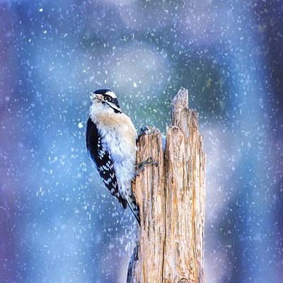Downy Woodpecker Photograph - Snowy Winter Downy by Bill Tiepelman