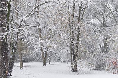 Photograph - Snowy Winter Forest by Liz Masoner