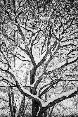 Snowy Winter Intertwine Art Print by James BO Insogna