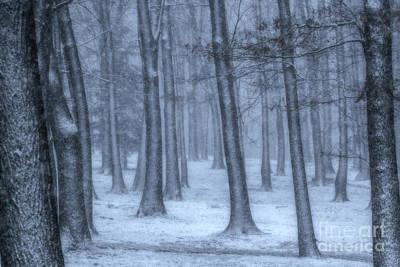Snowy Digital Art - Snowy Winter Woods by Randy Steele