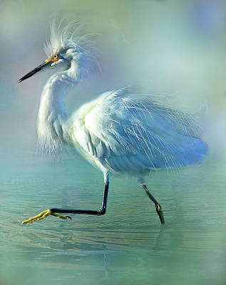 Photograph - Snowy With Attitude by HH Photography of Florida