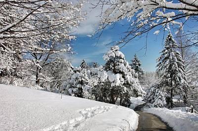 Photograph - Snowy Wonderland  by Elaine Manley