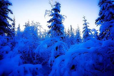 Photograph - Snowy Woods 1 - Inuvik by Desmond Raymond