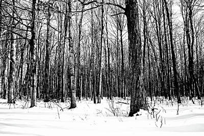 Photograph - Snowy Woods Black And White by Debbie Oppermann