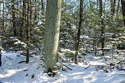 Photograph - Snowy Woods by Cornelia DeDona