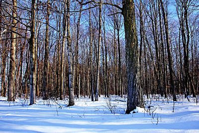 Photograph - Snowy Woods by Debbie Oppermann